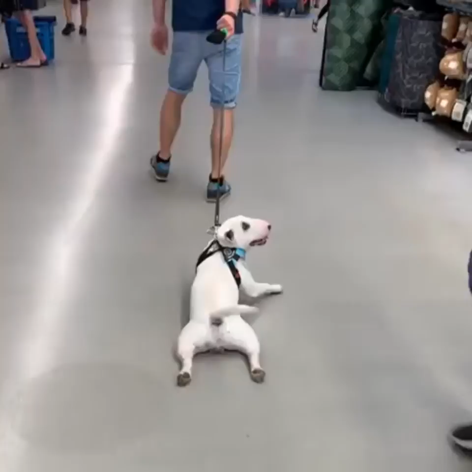Photo of Using the floor to cool down