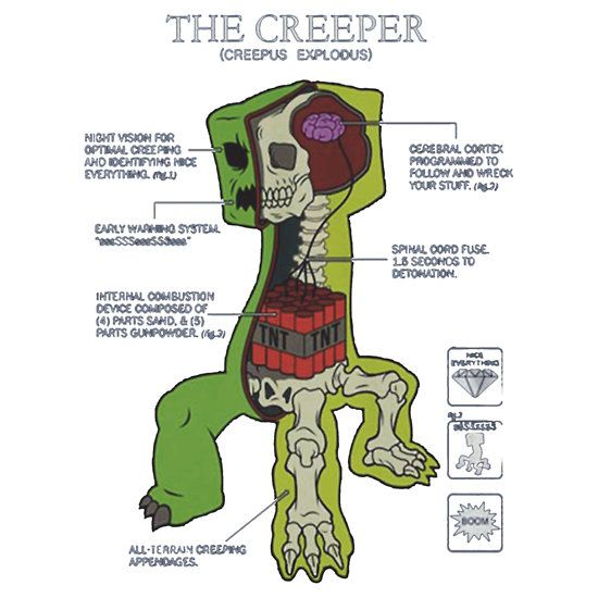 Minecraft Creeper Anatomy Mobs Anatomy Pinterest Minecraft Art