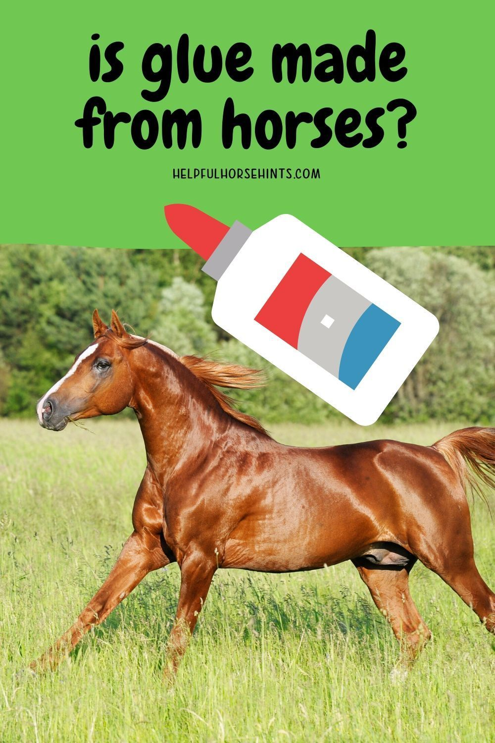 Is Glue Made From Horses In 2020 Horses Horse Riding Tips Glue