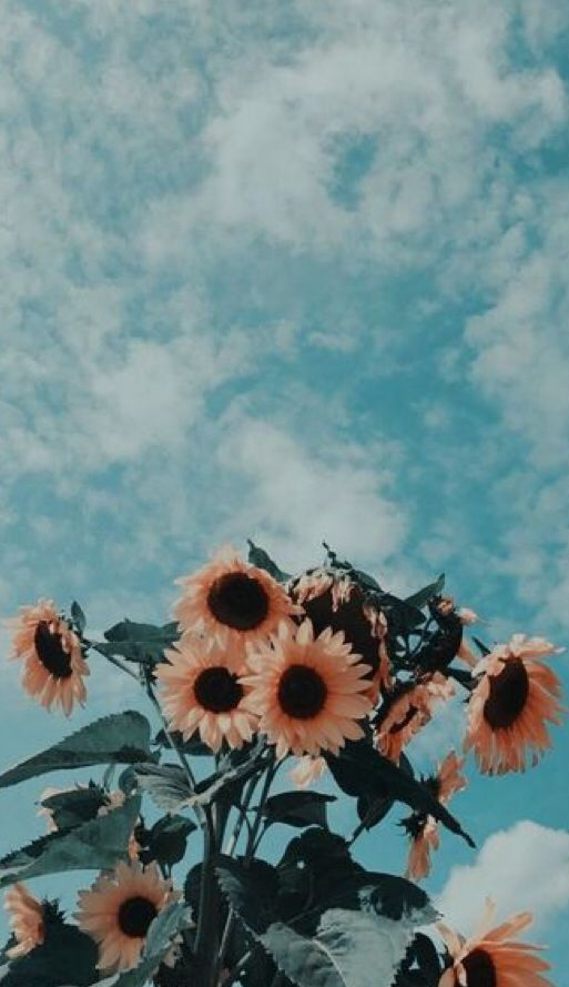 Pin By Galaxy J2 On Sunflowers Aesthetic Iphone Wallpaper Sunflower Wallpaper Painting Wallpaper
