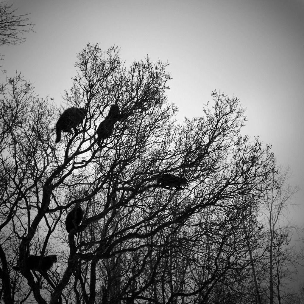 Cat tree no.2