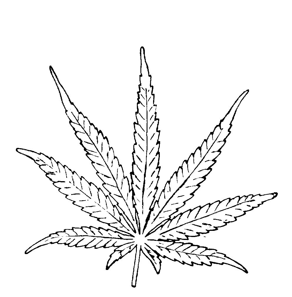 Marijuana Drawings Google Search Tattoo Inspiration