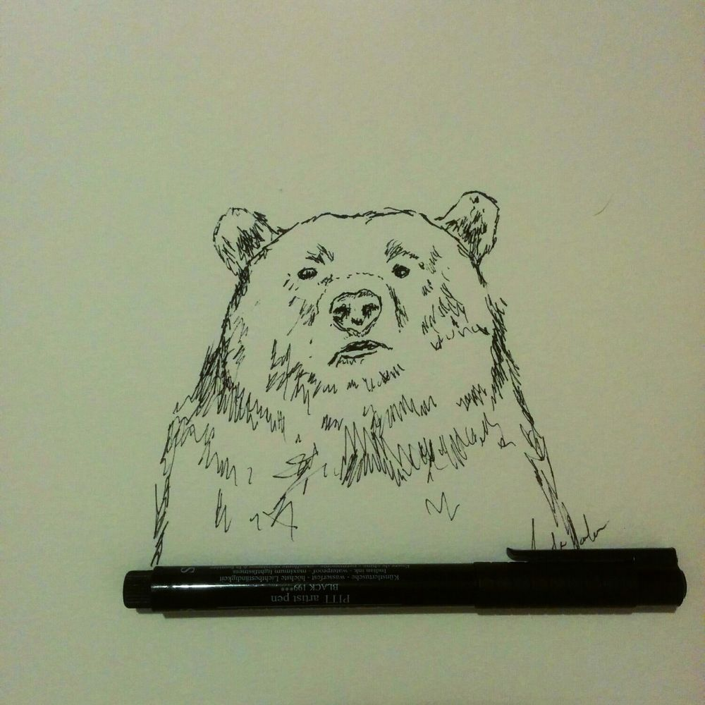 Day 17: a big beautiful grizzly