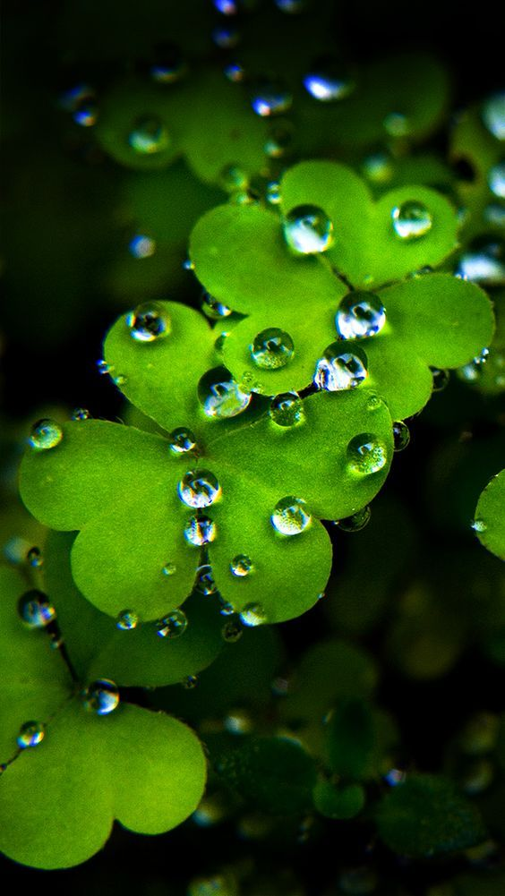 St Patrick S Day Quiz Irish Or Not St Patricks Day Wallpaper Best Wallpapers Android Beautiful Flowers Wallpapers