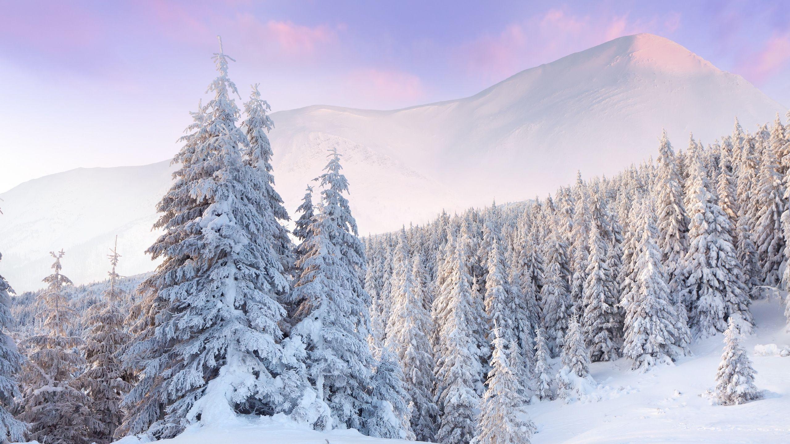 Scenic Winter Hd Wallpaper For Mac Amazing Wallpaperz Winter Wallpaper Background Snow
