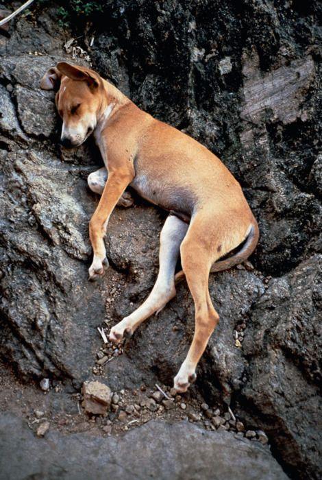 sleeping dog - gabriel orozco (1990)