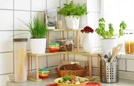 Asiantuntijan niksit: Näin kasvatat yrttejä omassa keittiössäsi!