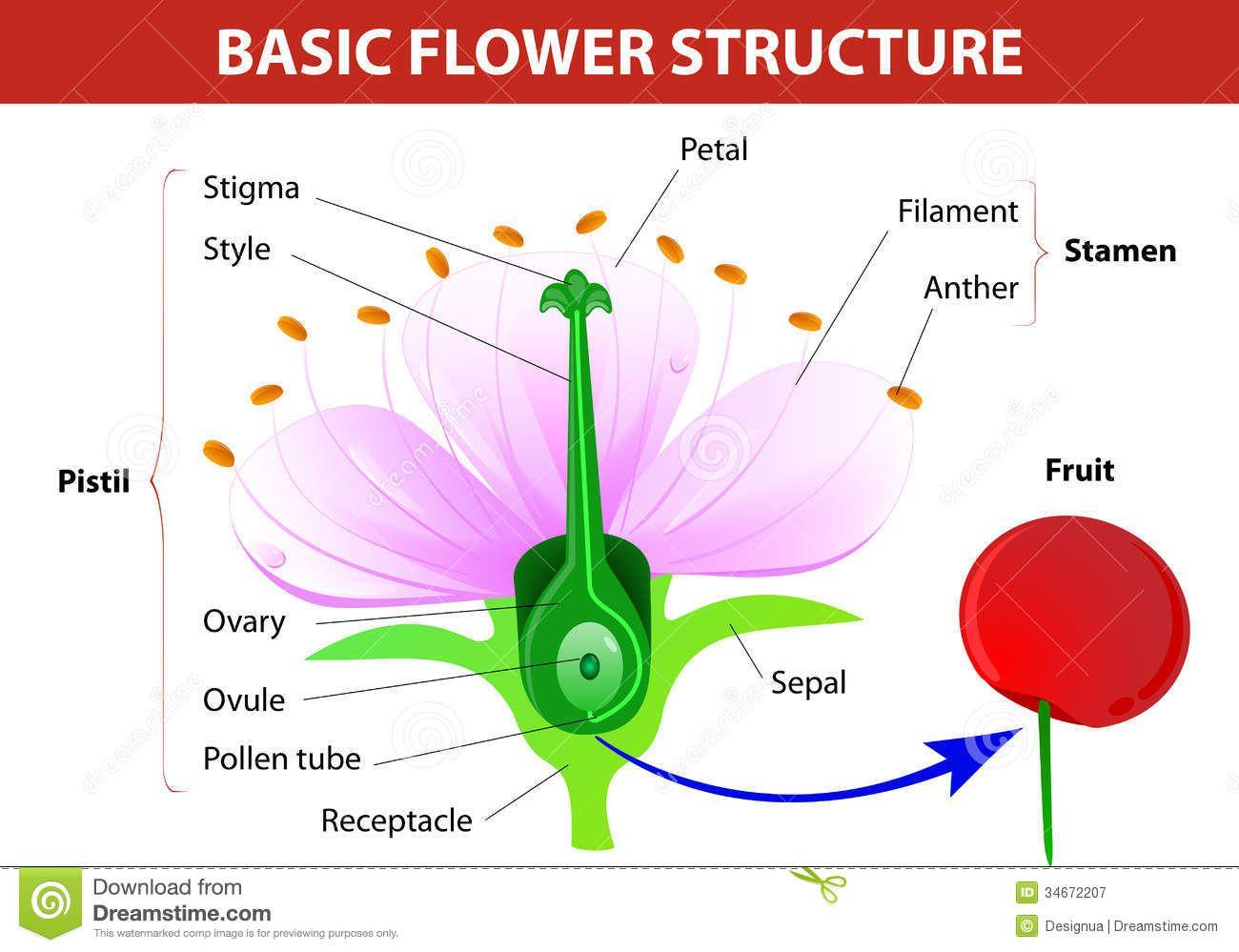 Pin by Aerobe on Flower & plants | Pinterest | Botany