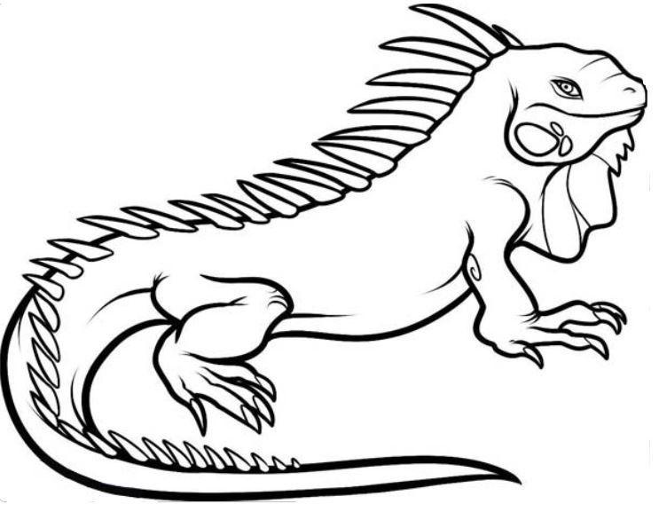 Iguana Coloring Page Free