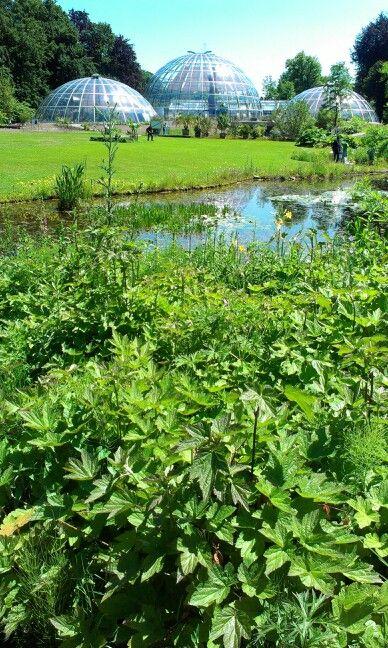 Botanischer Garten Has A Lake Flowers And Bubble Shaped Greenhouses Free Entrance Botanischer Garten Zurich Garten