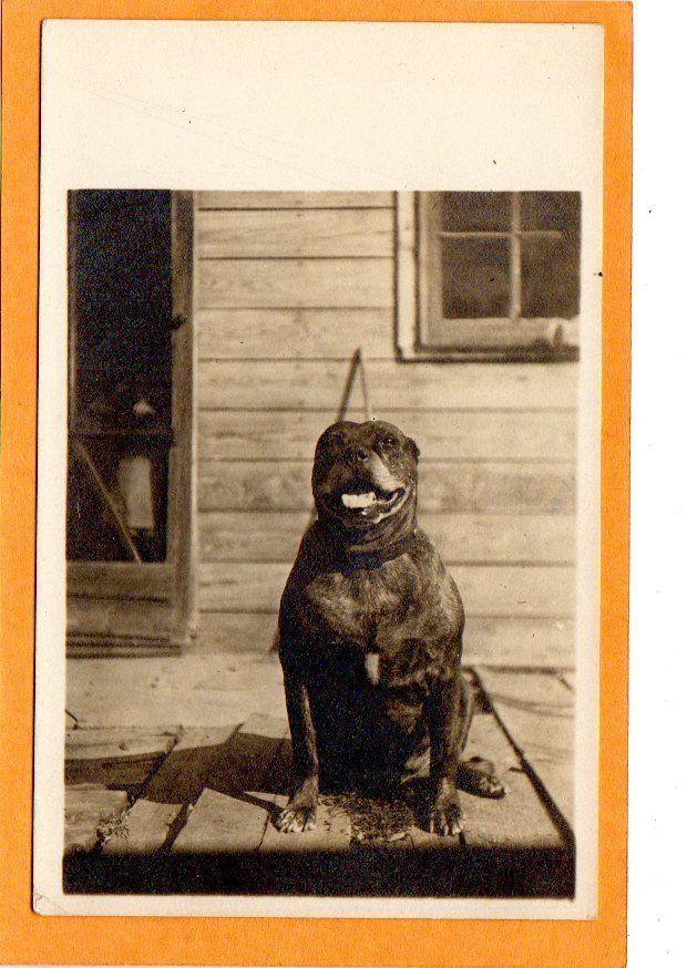 Real Photo Postcard RPPC - Pit Pitt Bull Dog on Porch. 1904 - 1918