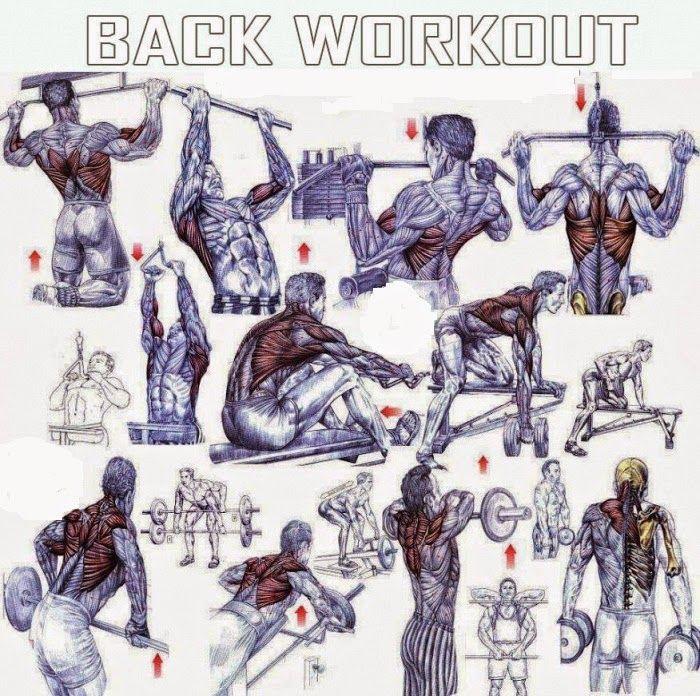 Back Exercises For Mass | bodybuilding | Pinterest | Search, Back ...