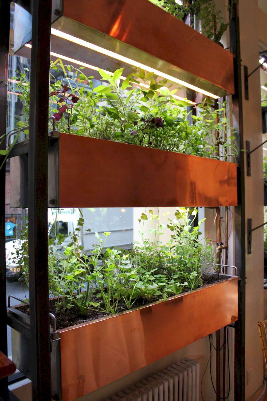 Shocking Indoor Gardening With Hydroponics Breakthrough