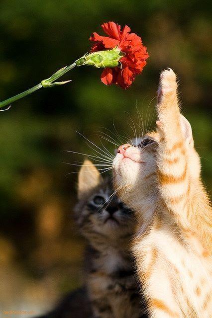 Ein Gelbes Katze mit Ein Rote Blumen :)