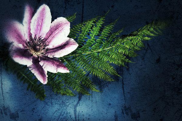 """FERN WITH FLOWER""    © fotograf kallen"