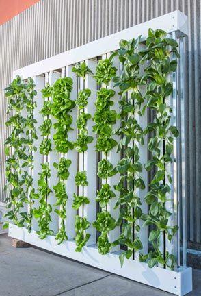 Home Aquaponics Building An Endless Food Supply 400 x 300