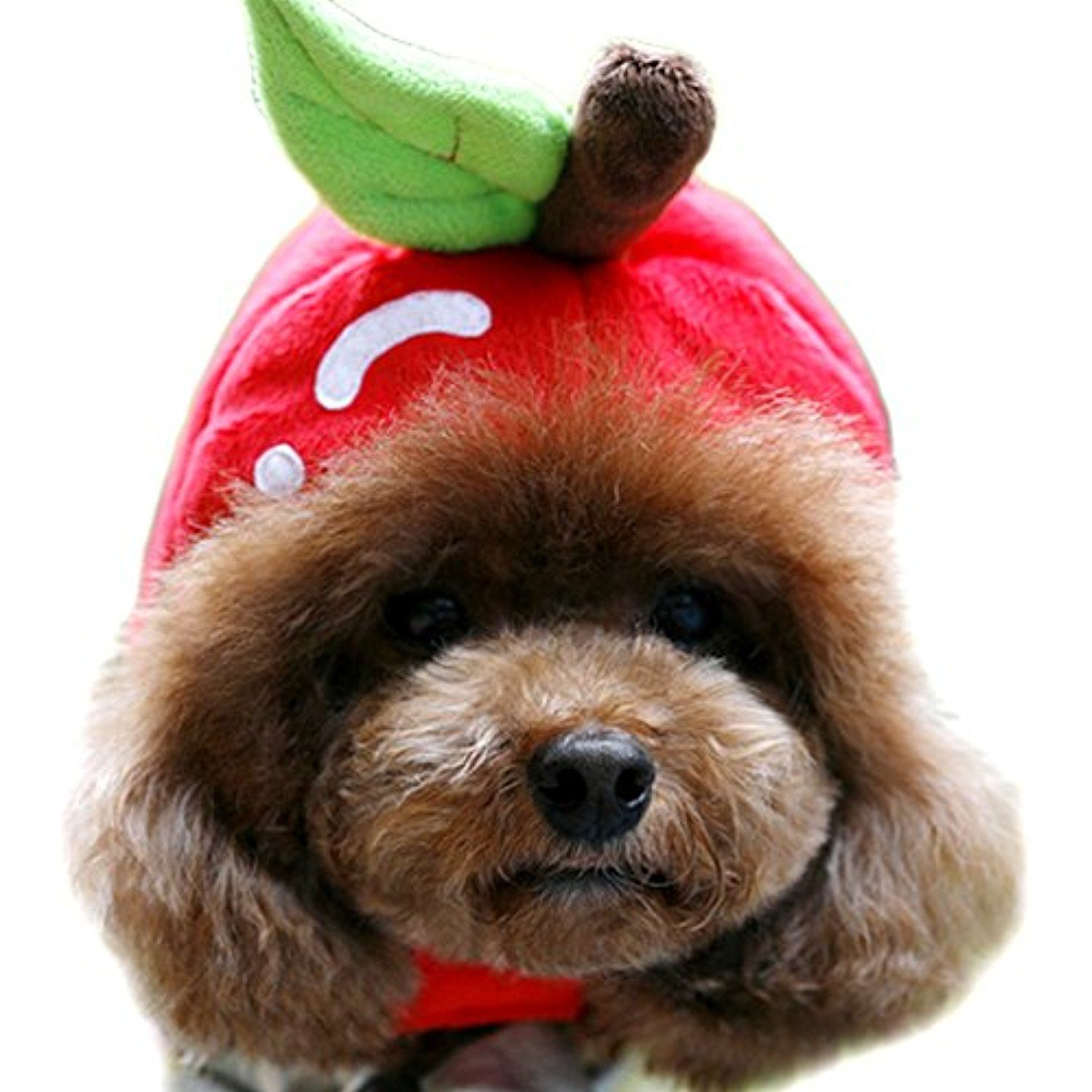 Alfie Pet By Petoga Couture Bobbie Strawberry Hat For Party