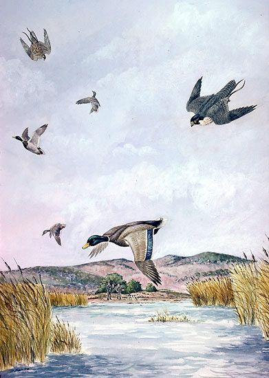 Luis M. Cuaresma - Pintura de la Naturaleza: CETRERÍA I - Alto vuelo
