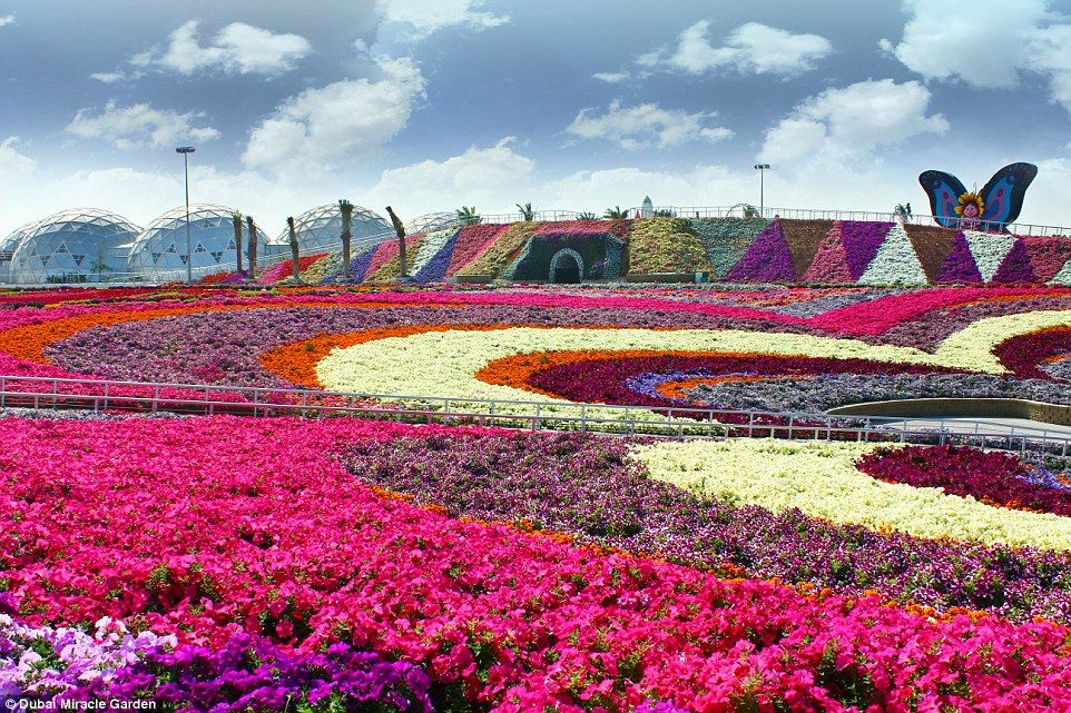 Inside The Worlds Largest Flower Garden In Middle Of A Desert