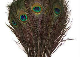 Beautiful 50//100PCS Rooster tail feathers 5-7inches//10-15cm Wholesale