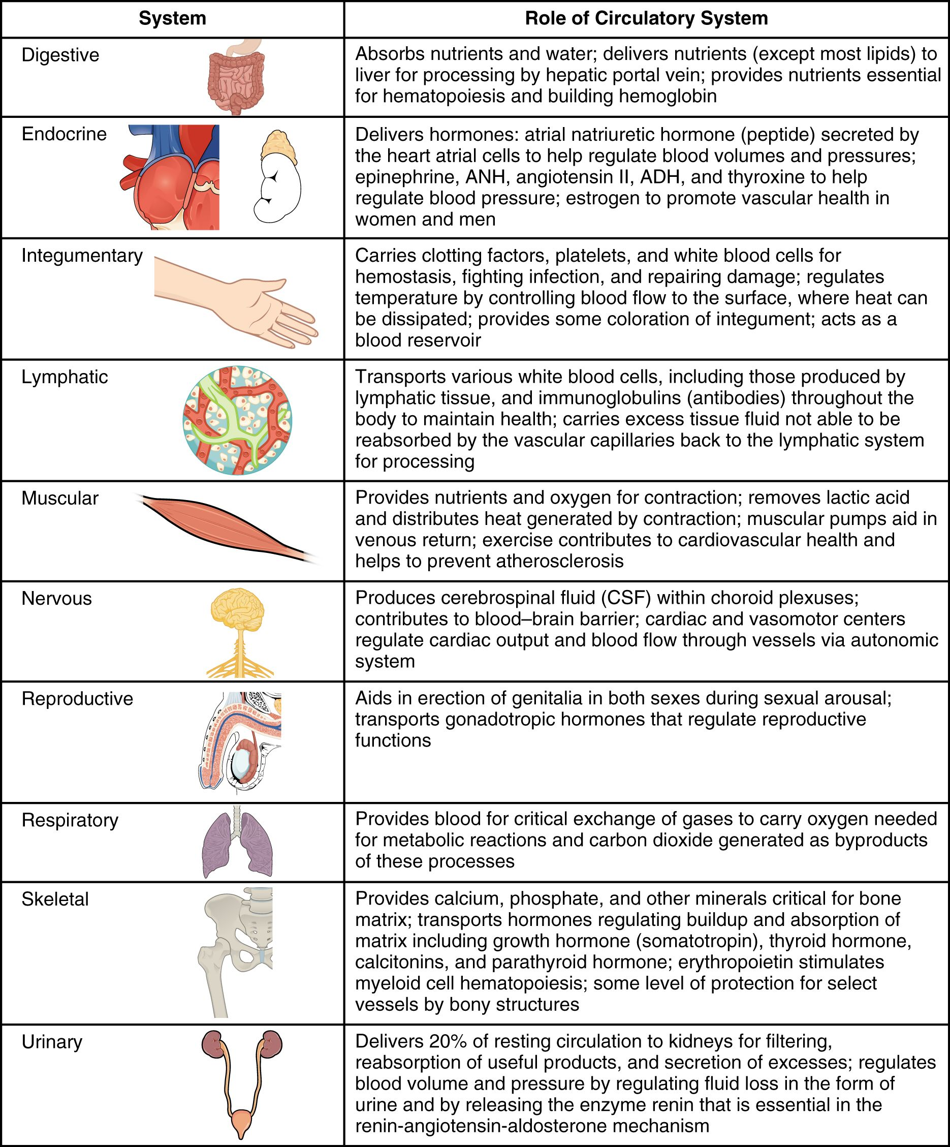 This Table Outlines The Role Of The Circulatory System In