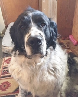 Adopt Veda On Dog Adoption Dog Search Help Homeless Pets