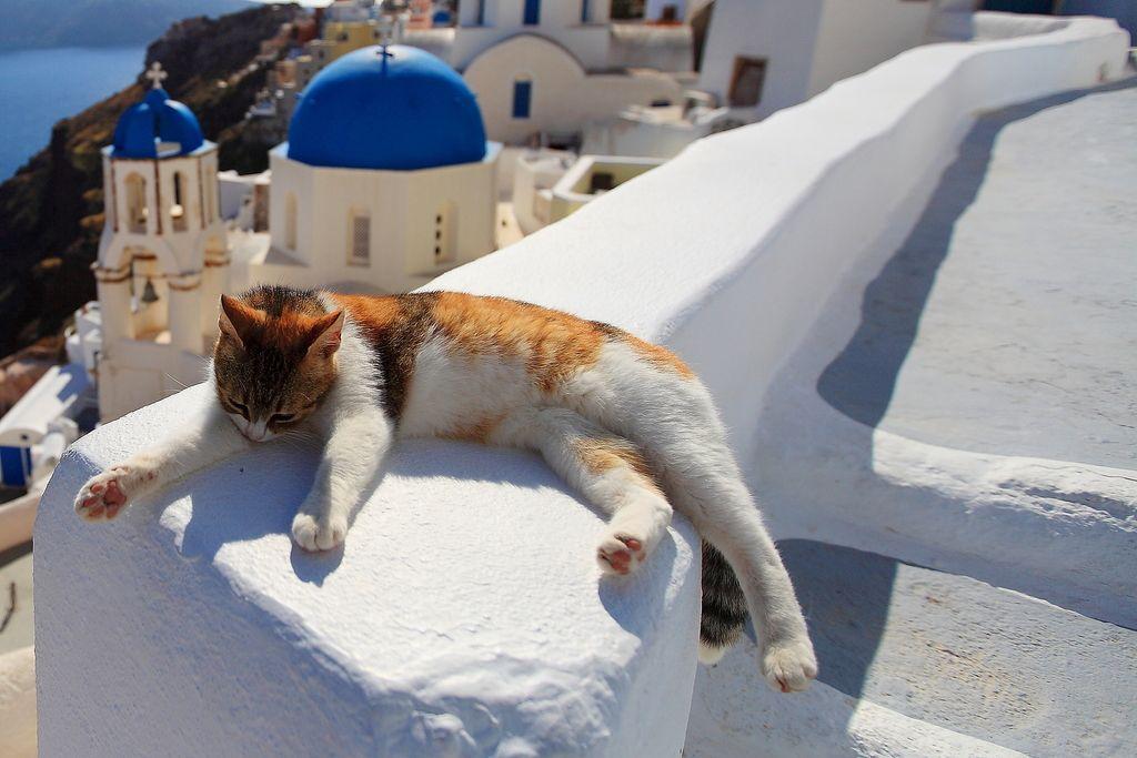 греческие кошки картинки мужчинам женщинам