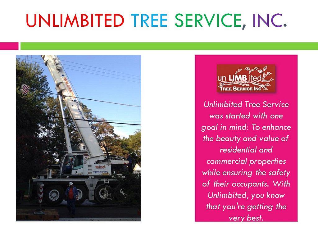 Tree service burtonsville tree service pasadena maryland