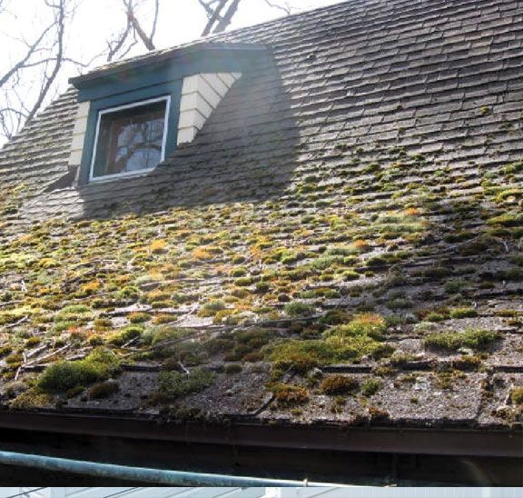 Moss Removal Gutter Cleaning Vancouver Wa By Northwest Roof Maintenance Roof Maintenance Roof Repair Roofing Diy