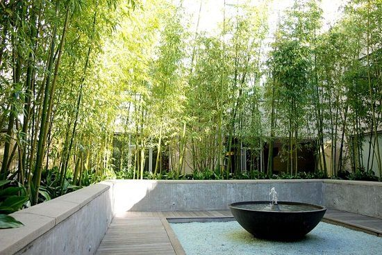 landscape design bamboo plants around rectangular courtyard