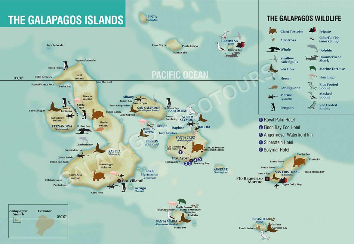 Galapagos - Ecuador | Traveling in 2019 | Galapagos islands ... on puerto ayora, pinta island, amazon map, puerto baquerizo moreno, yucatan peninsula map, brazilian highlands map, cuba map, oman map, isabela island, bahamas map, lesser antilles map, ha long bay, genovesa island, puerto rico map, charles darwin research station, nameless island, greenland map, galapagos national park, cape horn map, strait of magellan map, patagonia map, japan map, darwin island, ecuador map, bay of fundy, pampas map, canada map, tierra del fuego map, pacific map, fernandina island, baltra island, lake titicaca map, floreana island, falklands map,