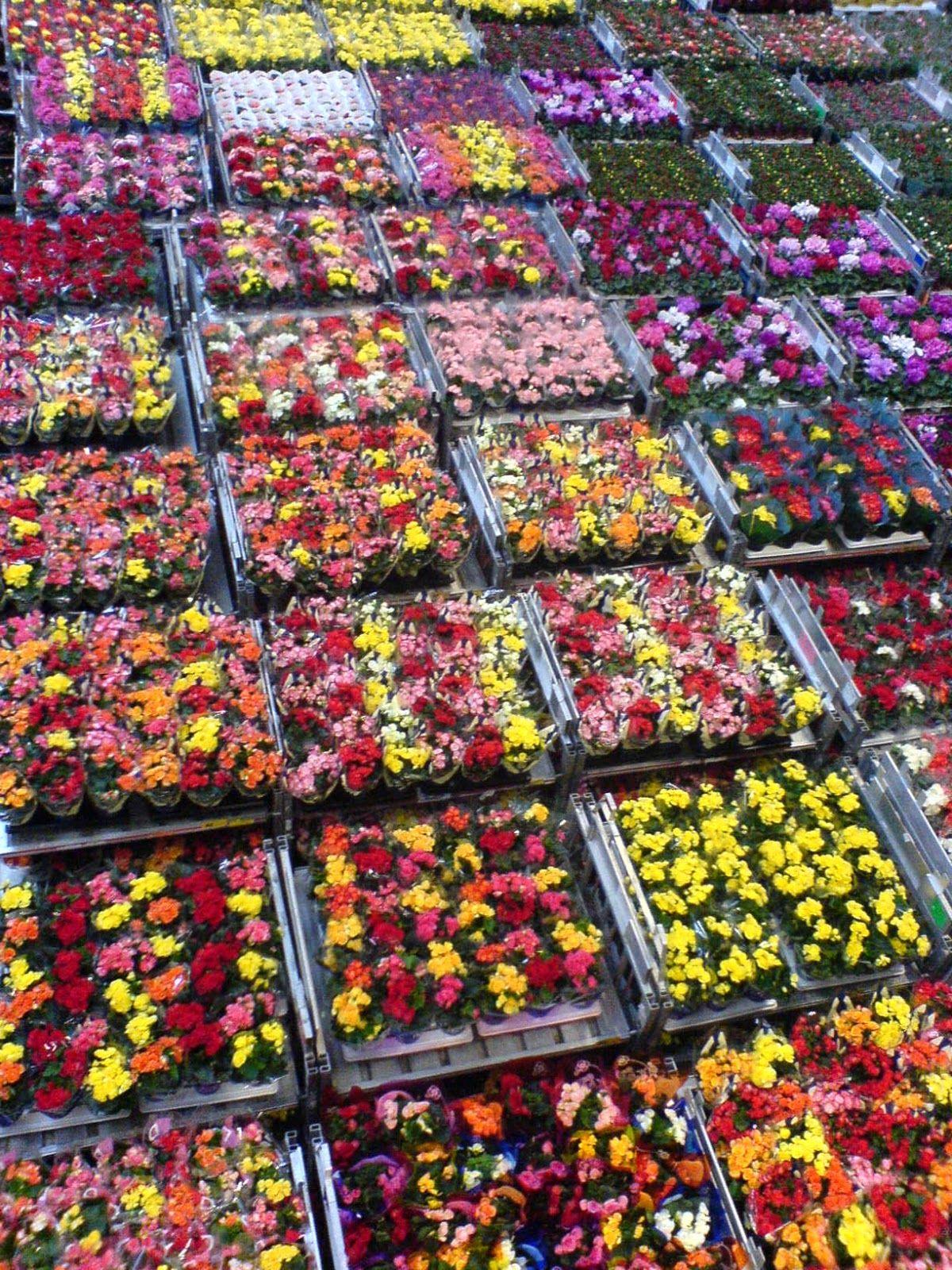Живые цветы оптом из колумбии и эквадора