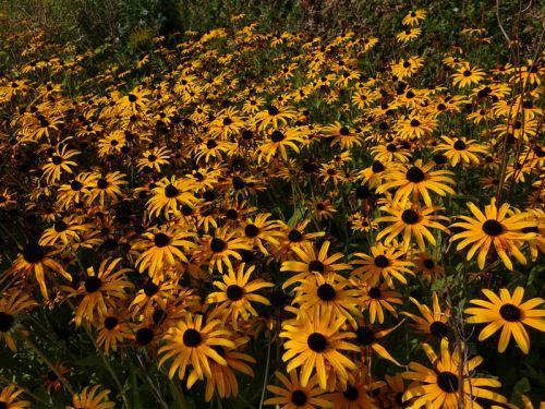 10 plantes pour massifs faciles cultiver jardinage pinterest. Black Bedroom Furniture Sets. Home Design Ideas