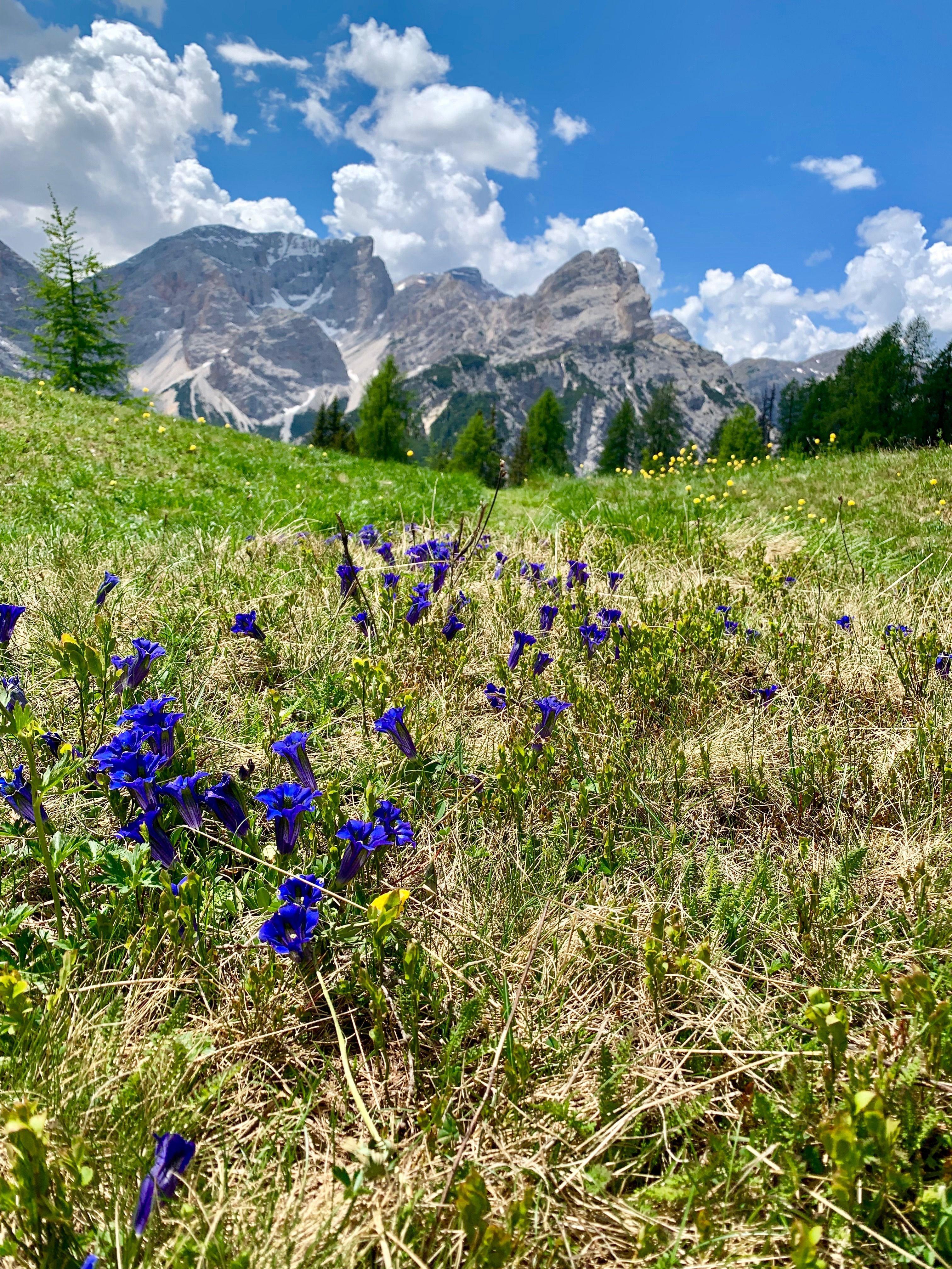 Spectacular Dolomites Hut To Hut Trek With TerraTreks