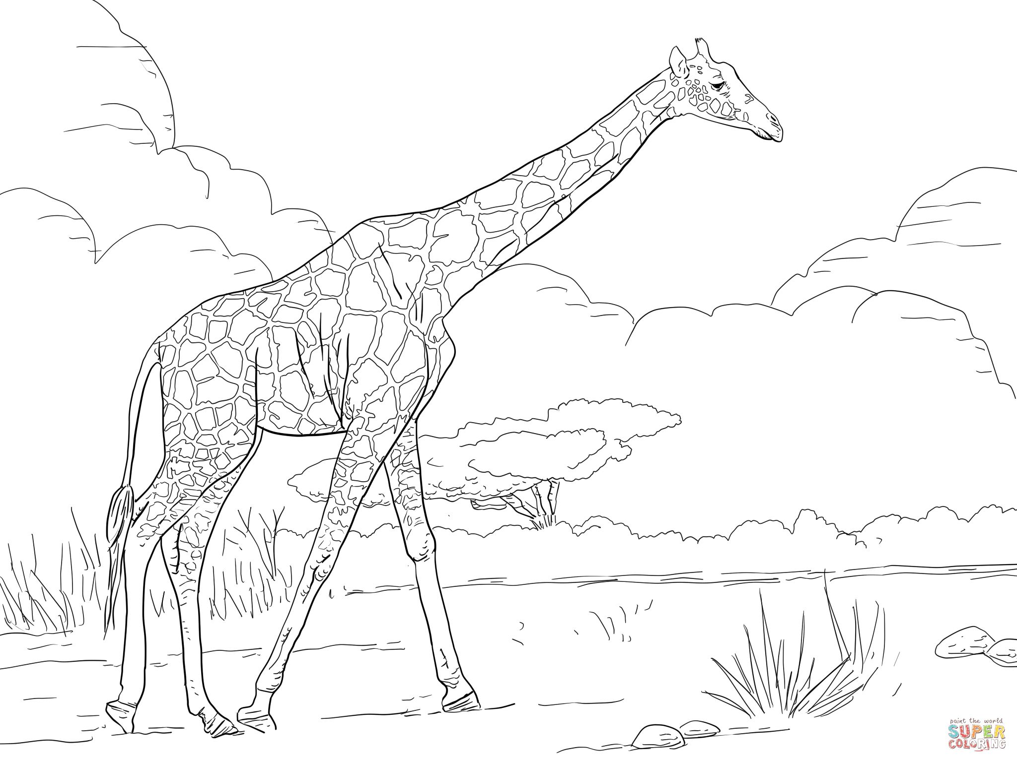 Coloring pages for adults giraffe - Reticulated Giraffe Coloring Page Free Printable Coloring Pages