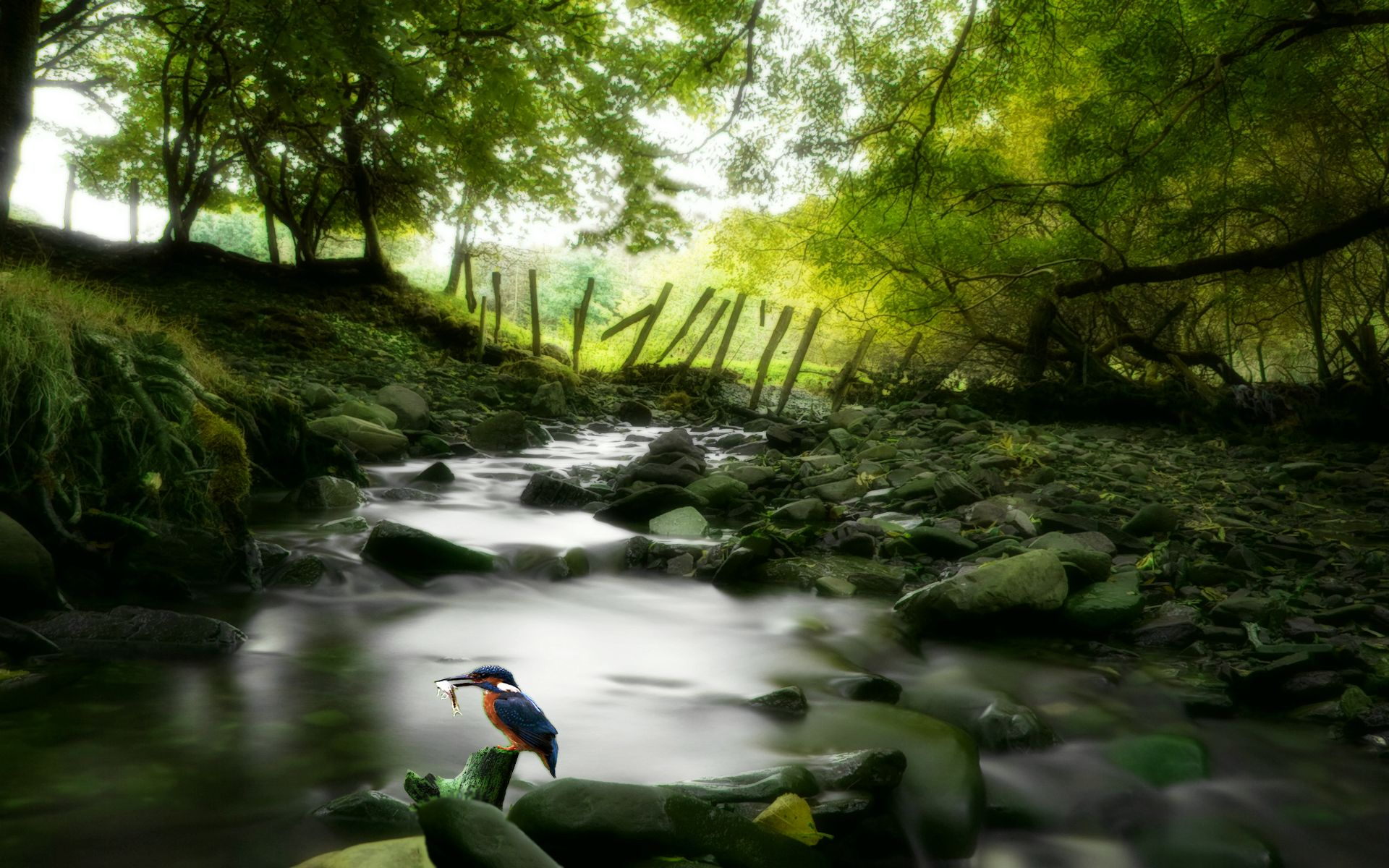 Awesome Nature Wallpapers High Resolution Free Download Jungle Wallpaper Nature Wallpaper Nature