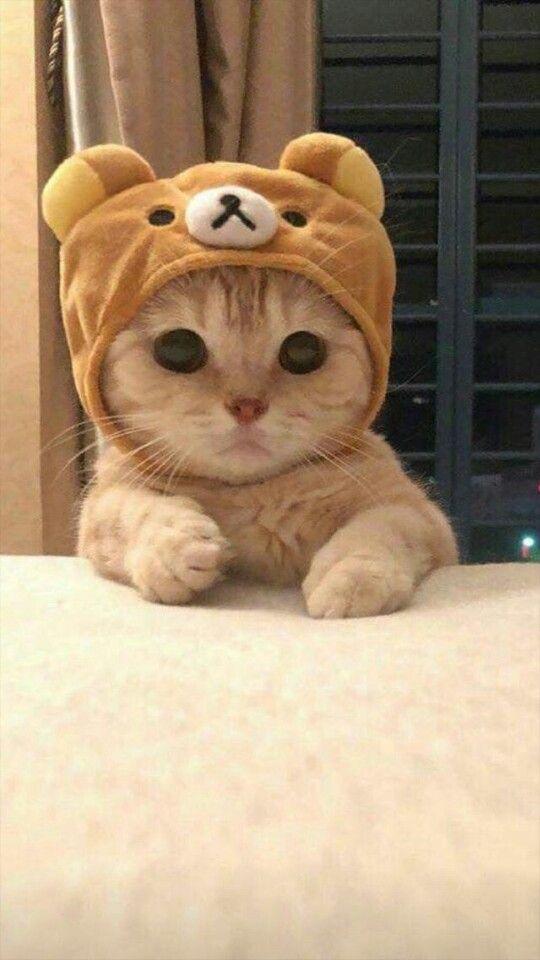 Pin Oleh Laura Sofia Rodriguez Gomez Di C U T E Anak Kucing Gemas Anak Kucing Foto Kucing Lucu