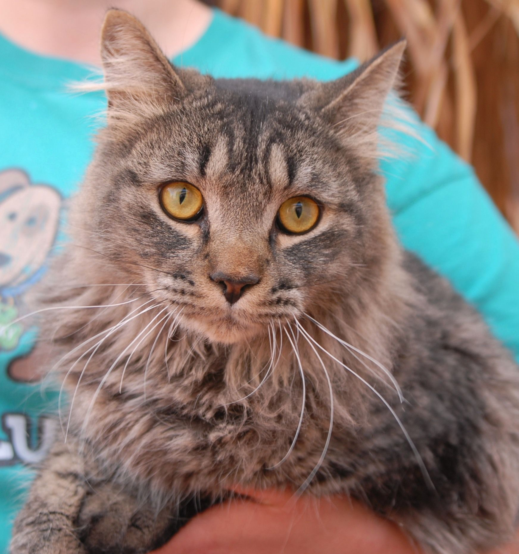 Christian is a docile youngster who loves belly rubs and