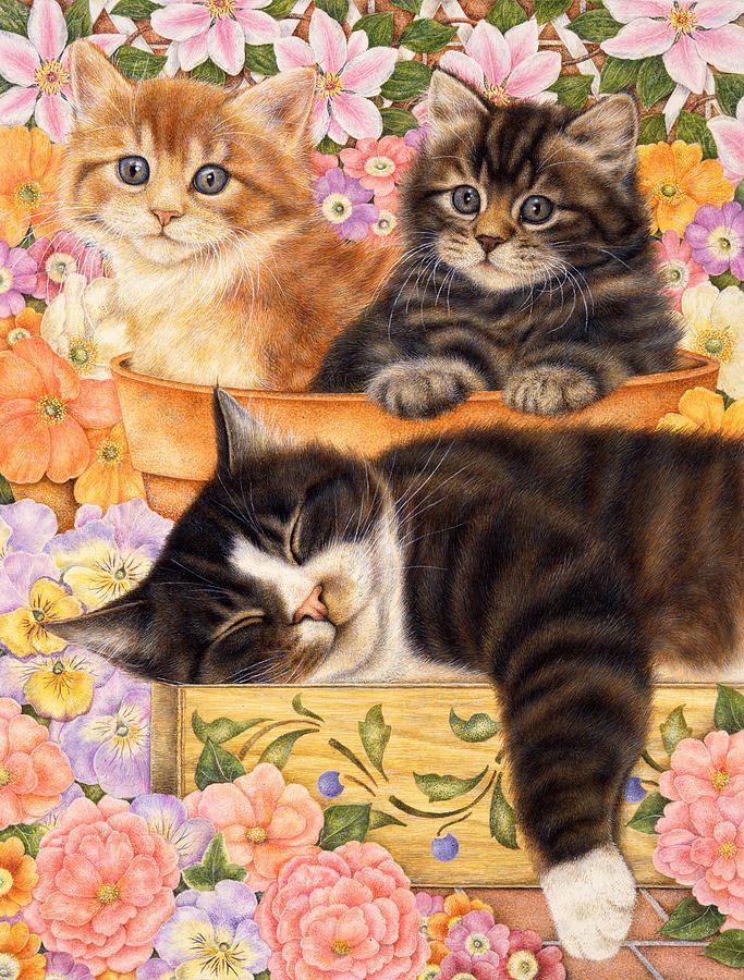 Картинки с кошками картинки с кошками, днем