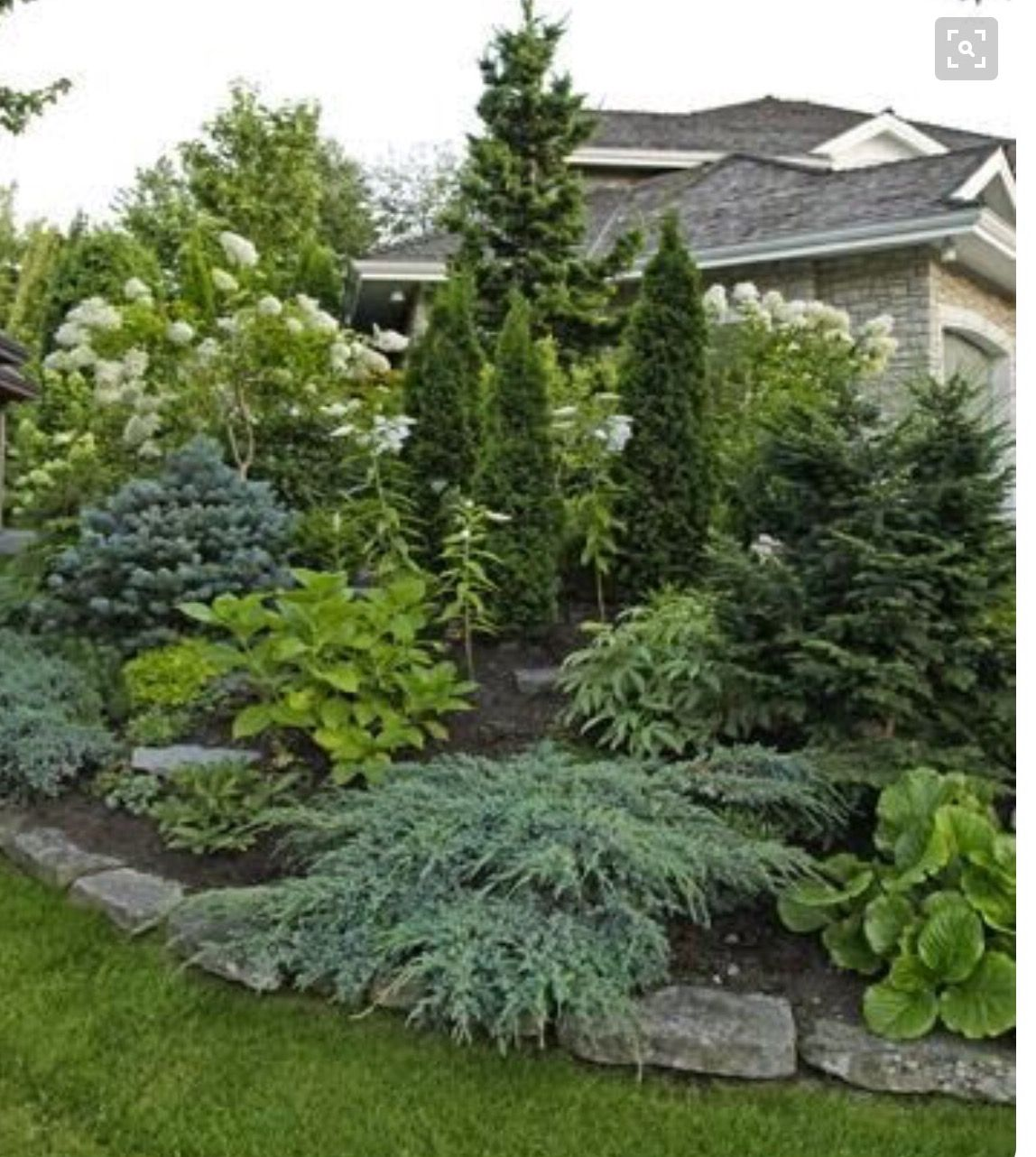 Evergreens evergreen tree front landscaping | Garden ...