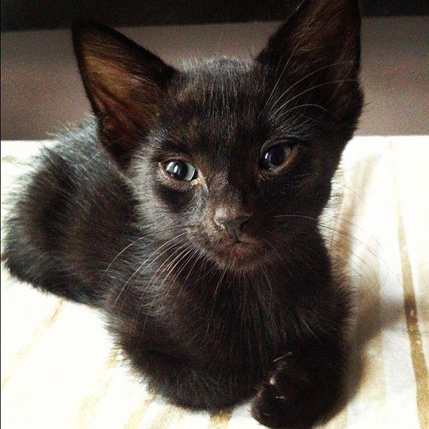 Black Kitty,Looks Like My Sisters Little Girl  Kittys -1684