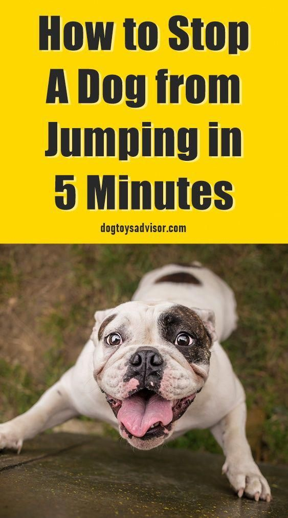 Here S A Simple 3 Step Strategy To Stop A Dog From Jumping On You