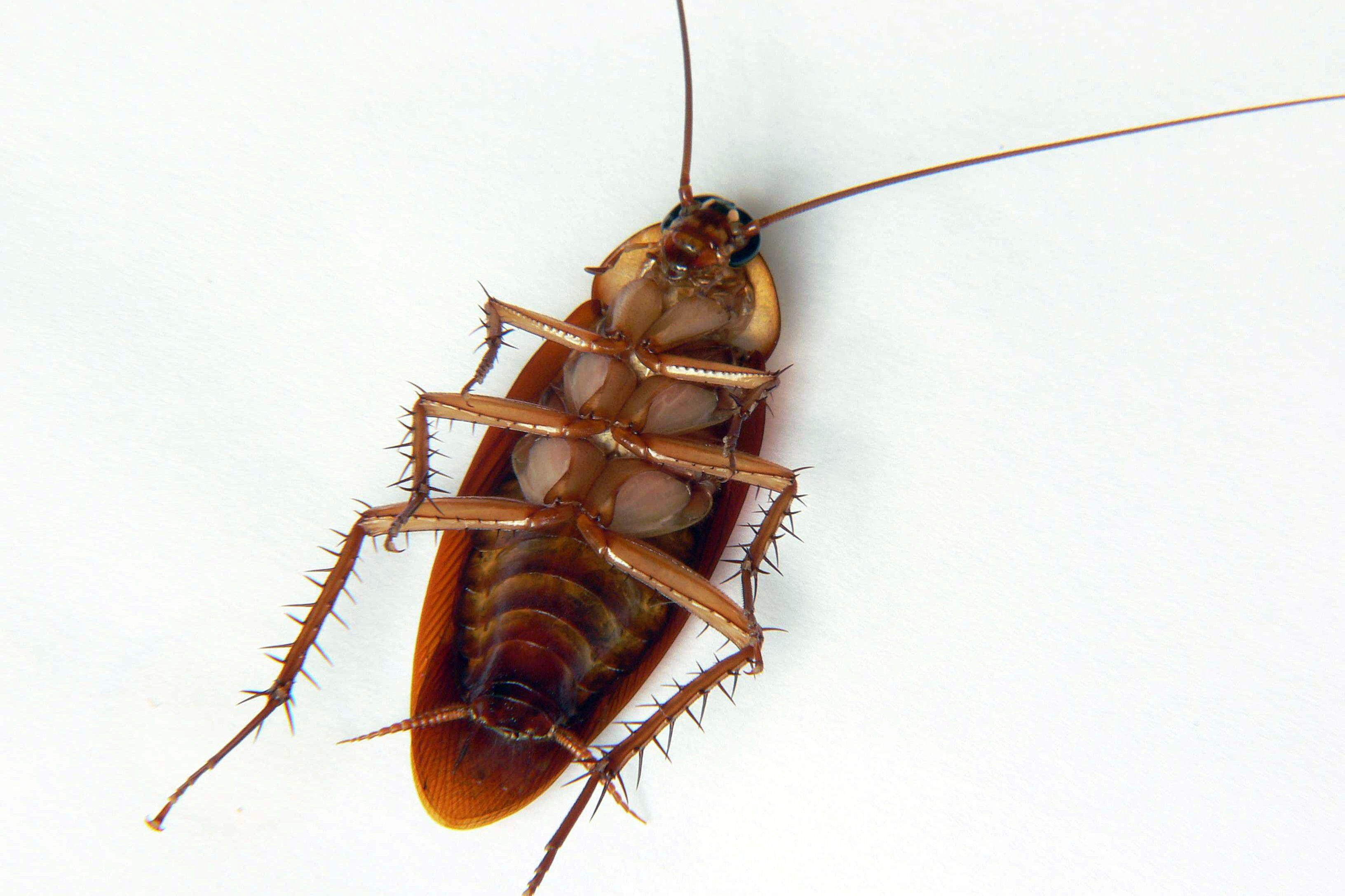 Learn How To Get Rid Of Roaches In Your Garage Roaches Cockroaches Get Rid Of Waterbugs