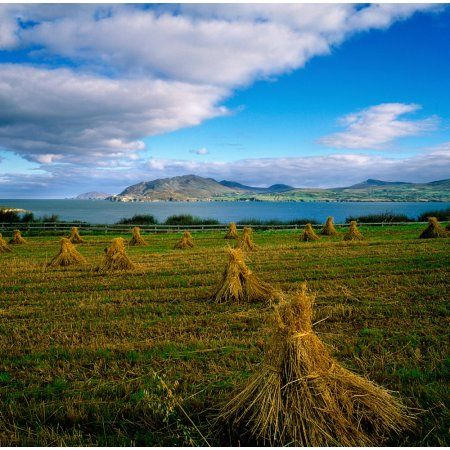 Posterazzi Hay Bales In A Field Ireland Canvas Art - The Irish Image Collection Design Pics (24 x 24)
