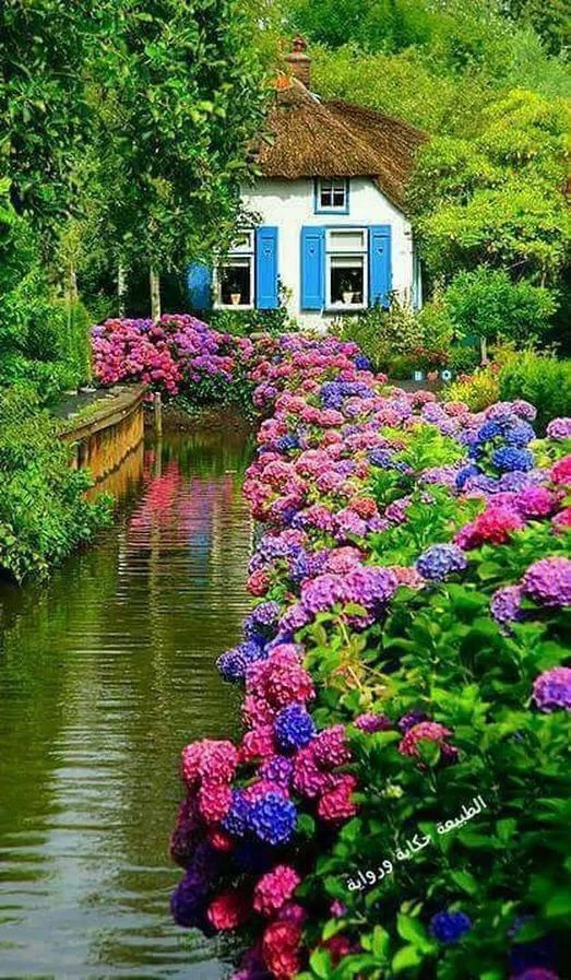 Pin By 沼 On Places In 2021 Beautiful Gardens Beautiful Flowers Garden Dream Garden