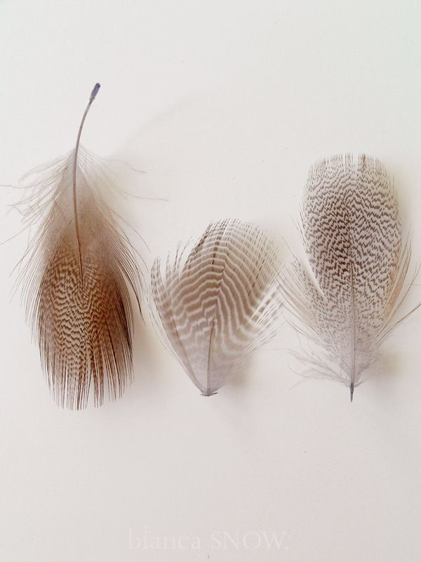feathers. | Bianca Snow