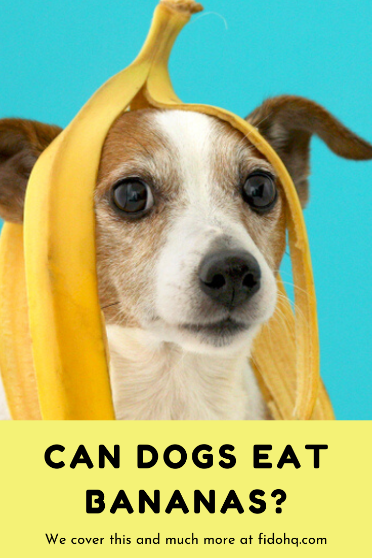 Bananas are safe for a dog to eat in moderation. They can