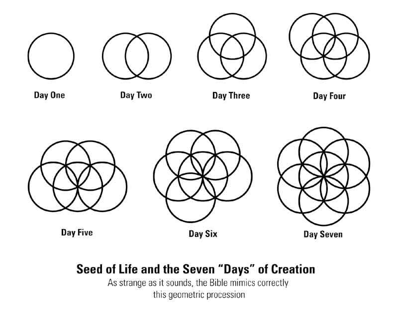 Seed of life tangle pattern | Seed of Life Pattern | Tangles in 2019