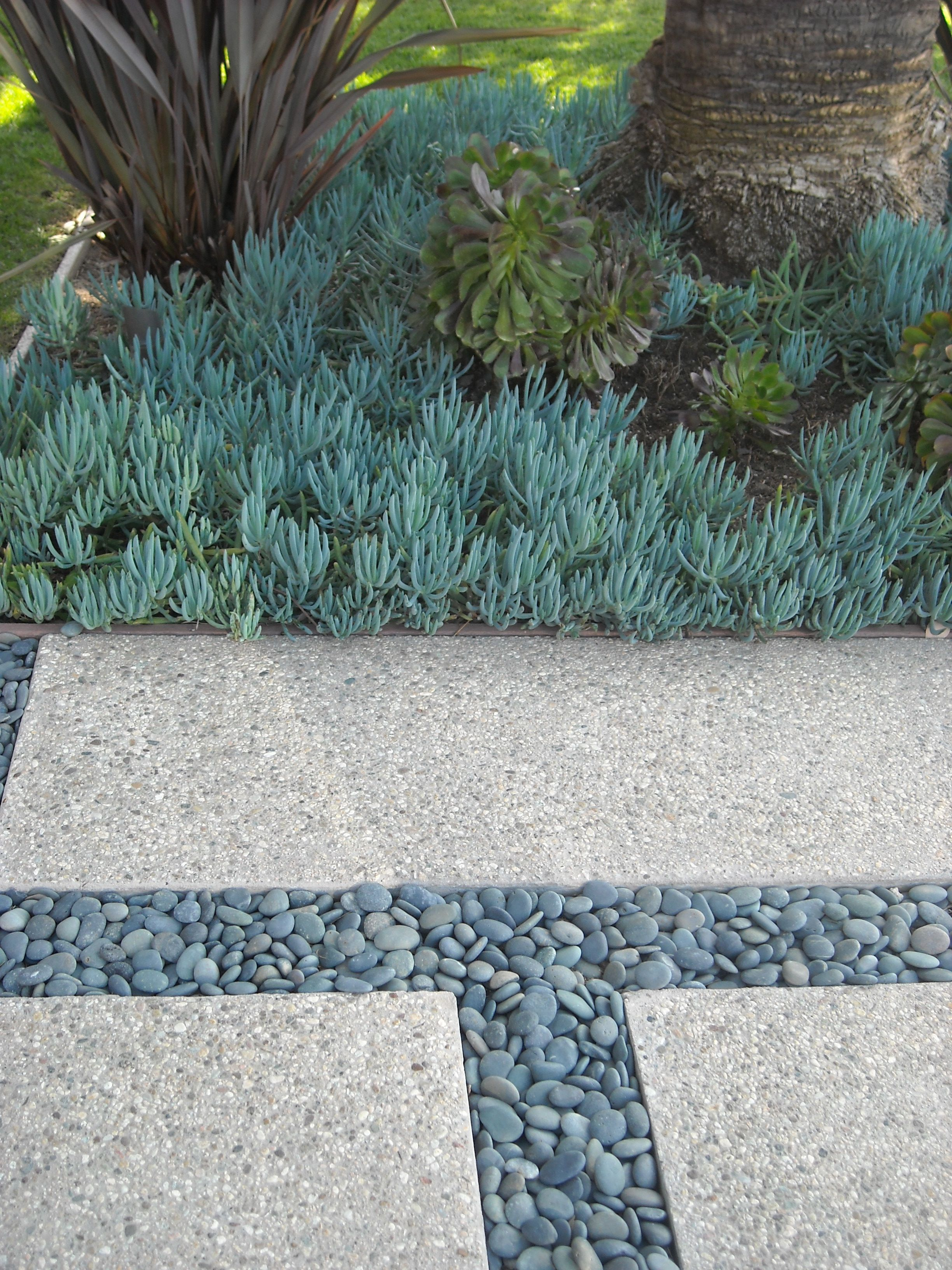 Great Lines With Perfect Contrast From The Round Stones And Texture Of Blue Chalkstick Succulent
