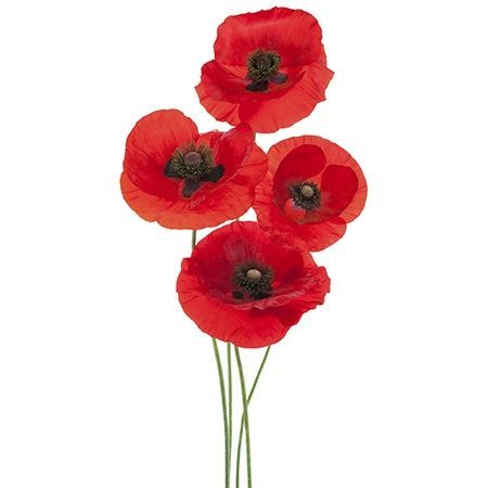 Symbolic meanings of flowers that youve been wanting to know red poppy flower meaning mightylinksfo